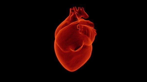 heart-1767552__340
